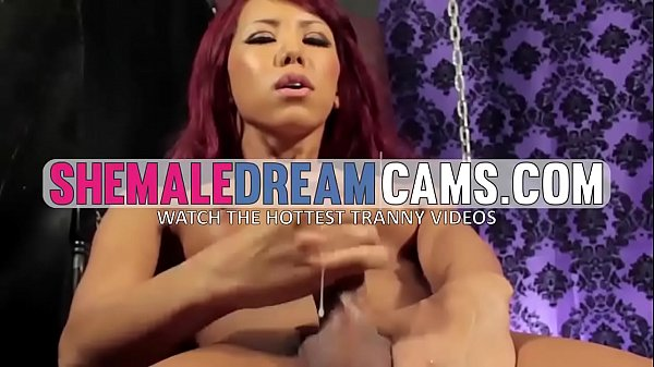 Sexy Shemale In Stockings Wanks For You – ShemaleDreamCams.com